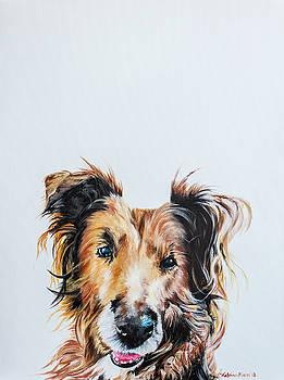 Happy Dog by Katrina Nixon