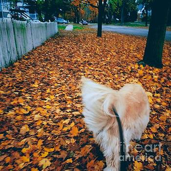Frank J Casella - Happy Fall Dog Walk