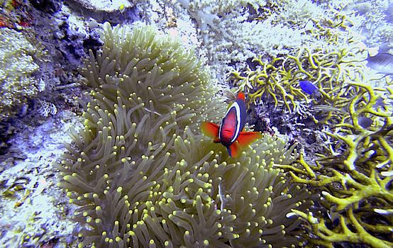 Happy Nemo by Paul Ranky