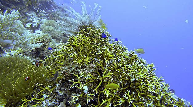 Happy Reef by Paul Ranky