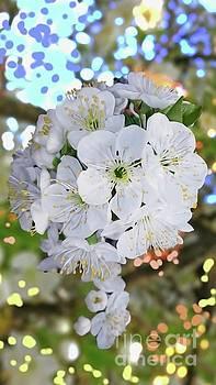 Happy Spring by Jasna Dragun