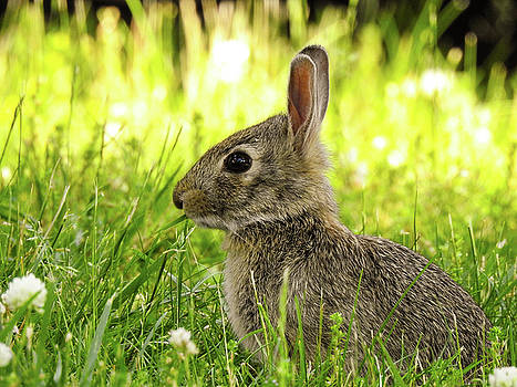 Hare In The Grass by Kathy Gail