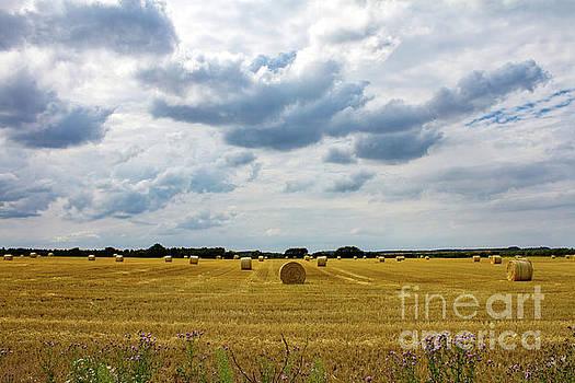 Harvest time at Sandringham by John Edwards