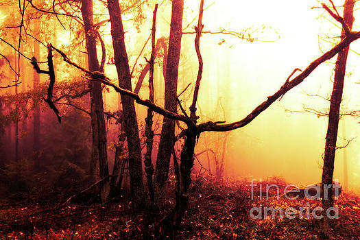 Haunted forest in a mystical light by Michal Boubin