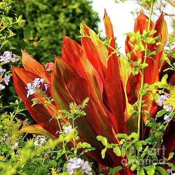 Hawaii Ti Leaf Plant by D Davila