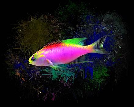 Hawaiian longfin anthias by Scott Wallace Digital Designs