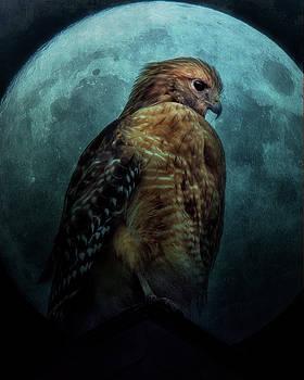 Rosette Doyle - Hawk and Moon