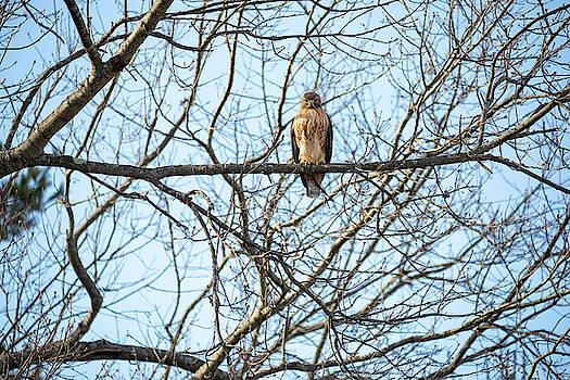 Hawks Eye View by Brian Hale