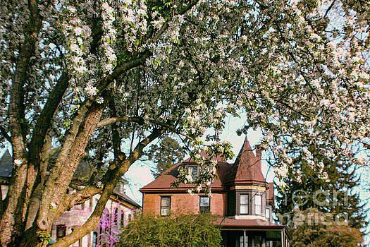 Sandy Moulder - Hawthorn Tree in Bloom