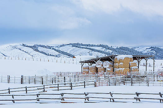Hay Stacked for Winter by Barbara Hayton