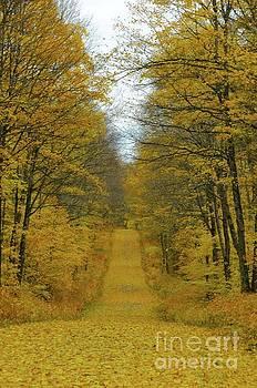 Heading Down the Yellow Leaf Road by Sandra Updyke
