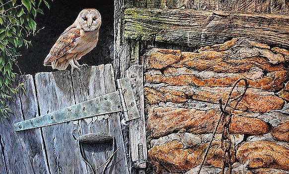 Heading Out For Dinner - Barn Owl by Alan M Hunt by Alan M Hunt