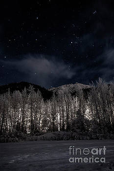 Headlights in the Trees by Bernita Boyse
