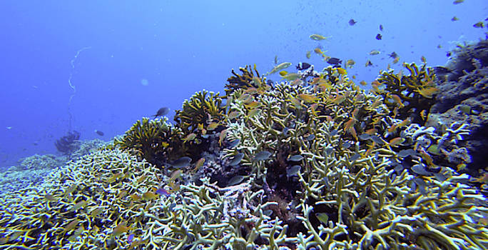 Healthy And Happy Reef by Paul Ranky