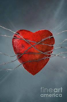 Benjamin Harte - Heart and Barbed wire