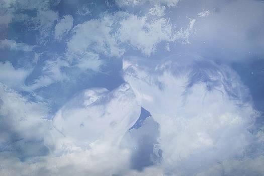Heavenly Dogs by Andrea Swiedler