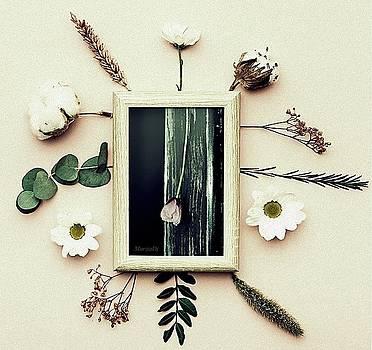 Herbarium by Marija Djedovic