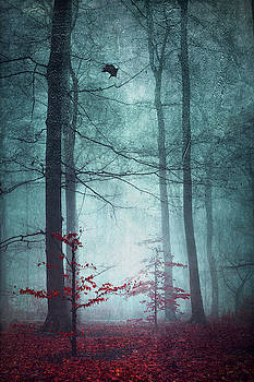 Here Comes The Fear - Fall Forest In Fog by Dirk Wuestenhagen