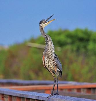Heron Calls by John R Williams