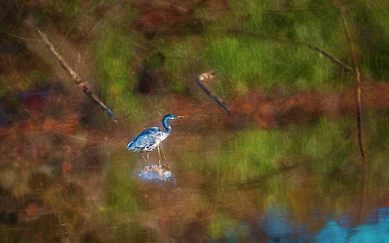 Heron p #i0 by Leif Sohlman