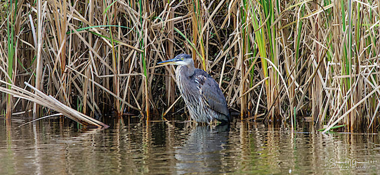 Heron Returns Four by Shawn M Greener