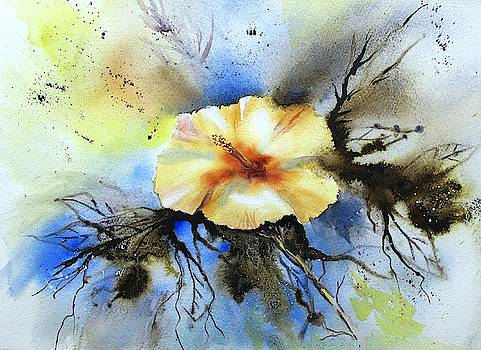 Hibiscus Beauty by Anne Kerr