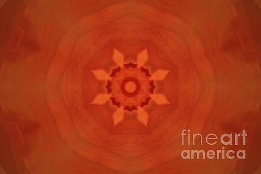 Hibiscus Sun Flower by Angela Stafford