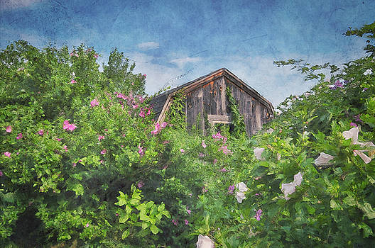 Hidden behind the Rose of Sharon by Andrea Swiedler