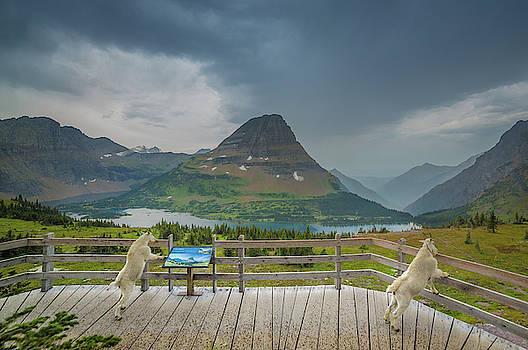 Hidden Lake Overlook // Glacier National Park by Nicholas Parker