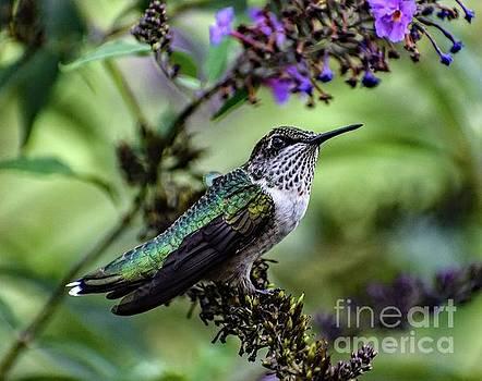 Cindy Treger - Hiding Ruby-throated Hummingbird,