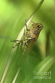 Cindy Treger - Hiding Within - Grasshopper