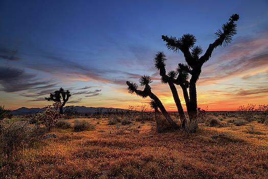 High Desert Sunset by James Eddy
