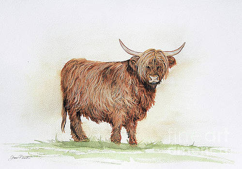 Highland Cow In Watercolor by Jean Plout
