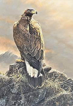 Highlander - Golden Eagle by Alan M Hunt