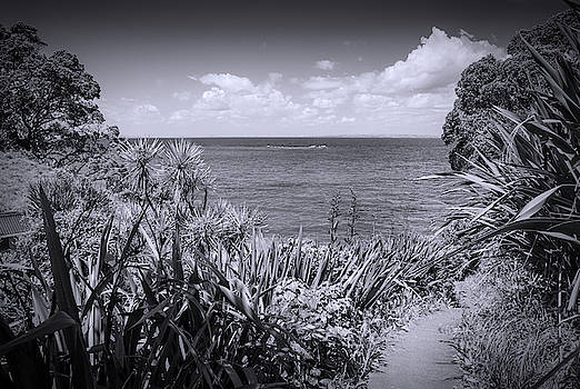 Hiking on Tiritiri Matangi New Zealand BW by Joan Carroll