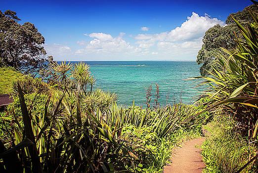 Hiking on Tiritiri Matangi New Zealand III by Joan Carroll