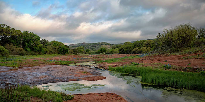 Hill Country Morning  by Harriet Feagin