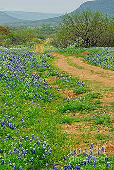 Hillcountry Blues by Gary Richards