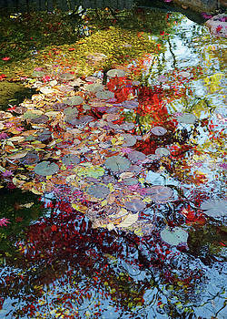 Hillwood Reflections by David Posey