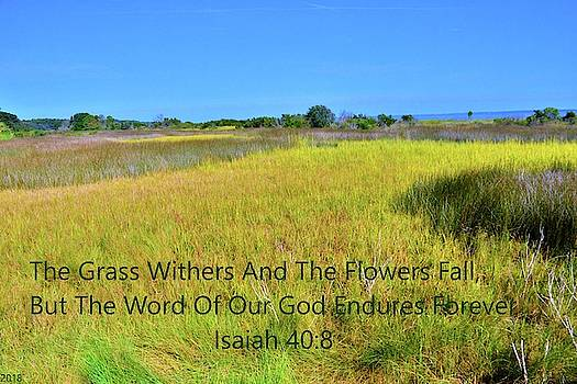 Hilton Head South Carolina Marshland Isaiah 40 8 by Lisa Wooten