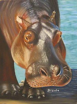 Hippo by Brenda Maas