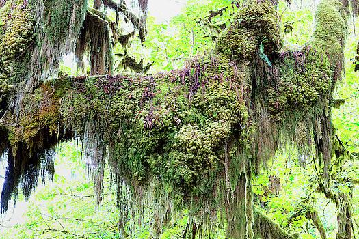 Hoh Rain Forest Moss by Jackson Ball