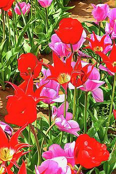 Holland Ridge Tulip Farm # 35 by Allen Beatty