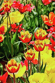 Holland Ridge Tulip Farm # 36 by Allen Beatty