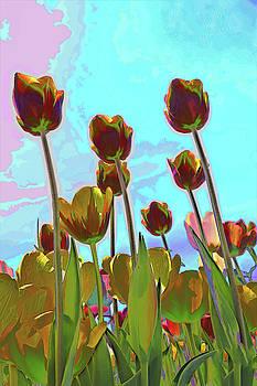 Holland Ridge Tulip Farm # 37 by Allen Beatty
