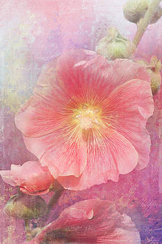 Hollyhock by Cindi Ressler