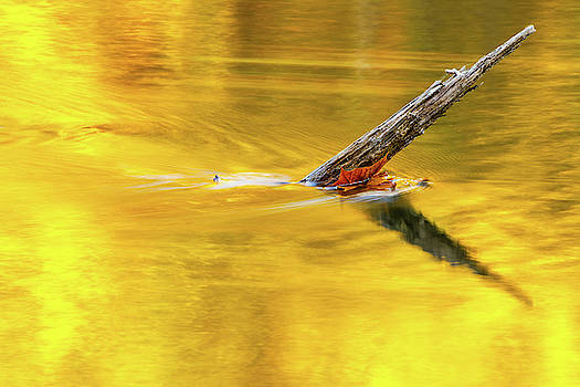 Holston River Reflection by Greg Booher