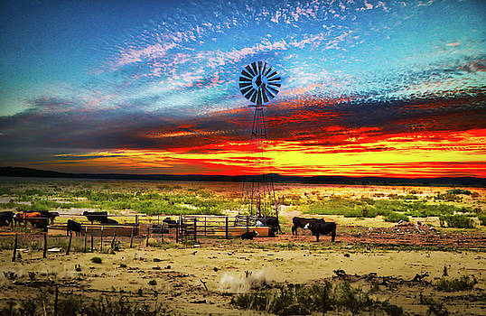 Home on the Range by Mim White