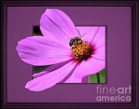 Honey Bee On Pink by Smilin Eyes  Treasures