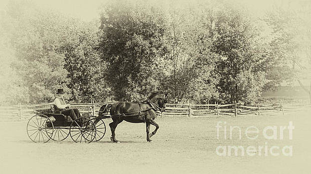 Horse and buggy - 1860s style by Robert McAlpine